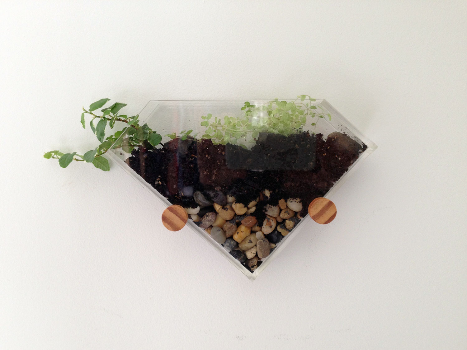 Angled wall mounted terrarium
