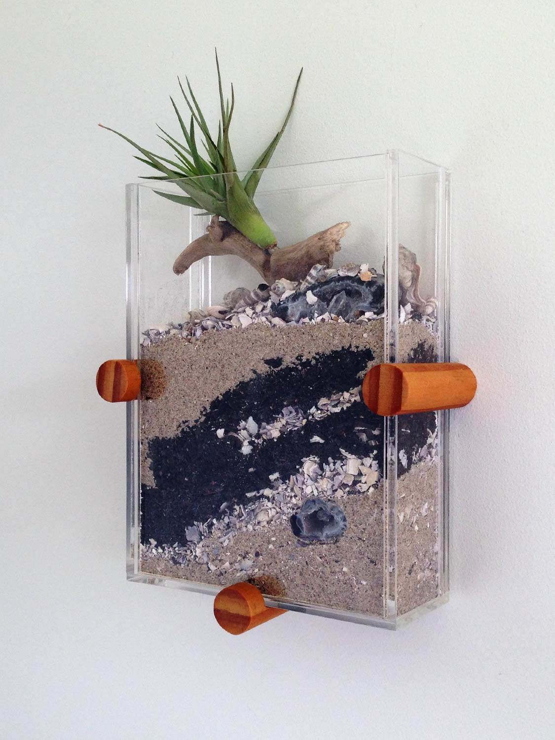 Wall mounted terrarium with air plant