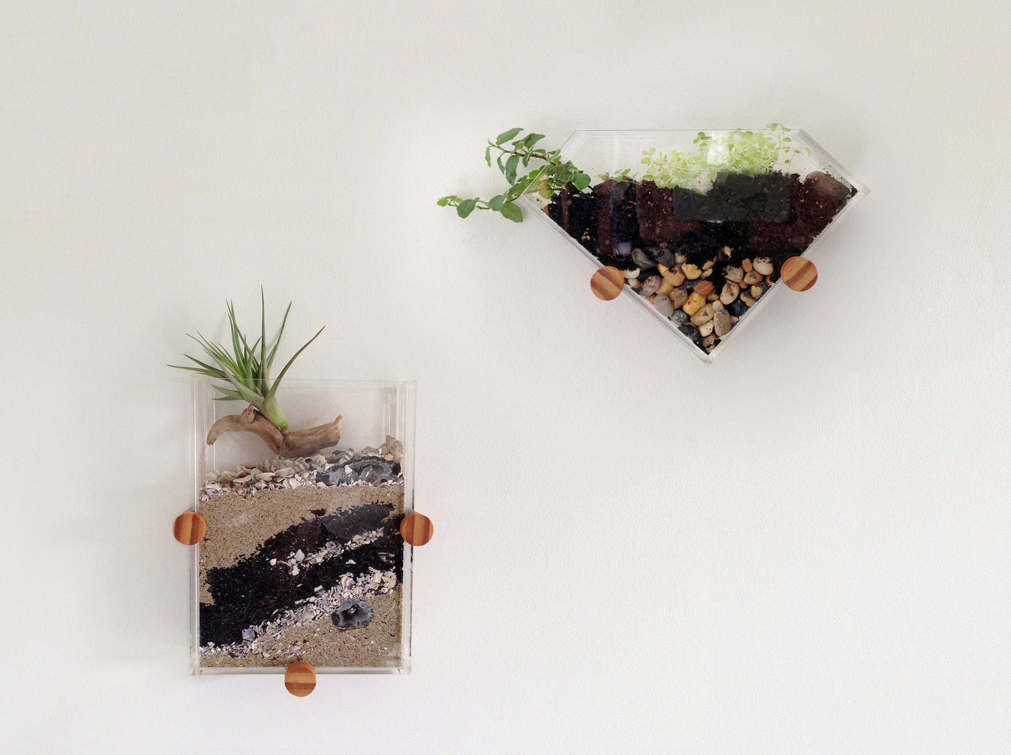 Wall mounted terrariums