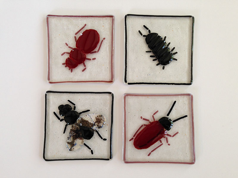 Clockwise from top left: beetle, slater (pill bug), cockroach, fly