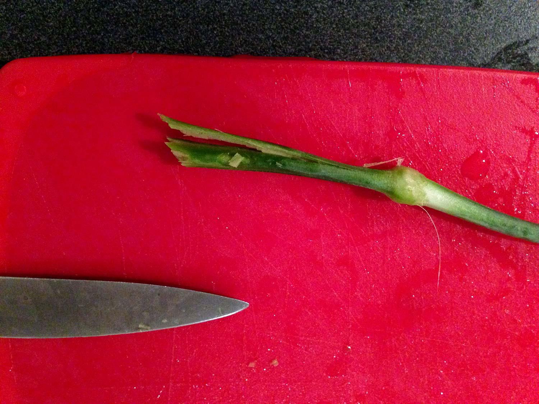 Cut stem