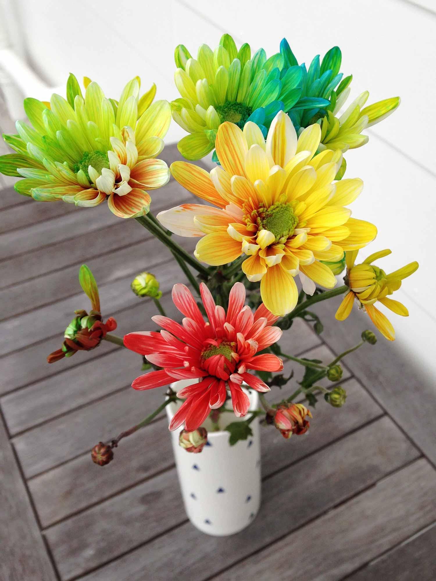 Rainbow spray chrysanthemums