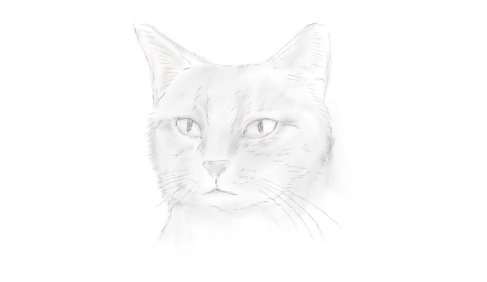 Cat sketch
